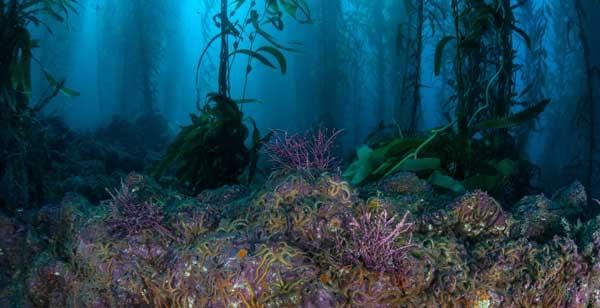"""La babosa marina que """"hace"""" la fotosíntesis"""