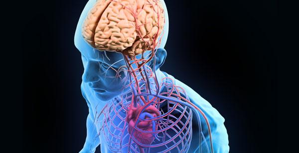 Tu cableado cerebral: el conectoma
